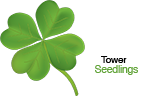 Tower Seedlings Logo
